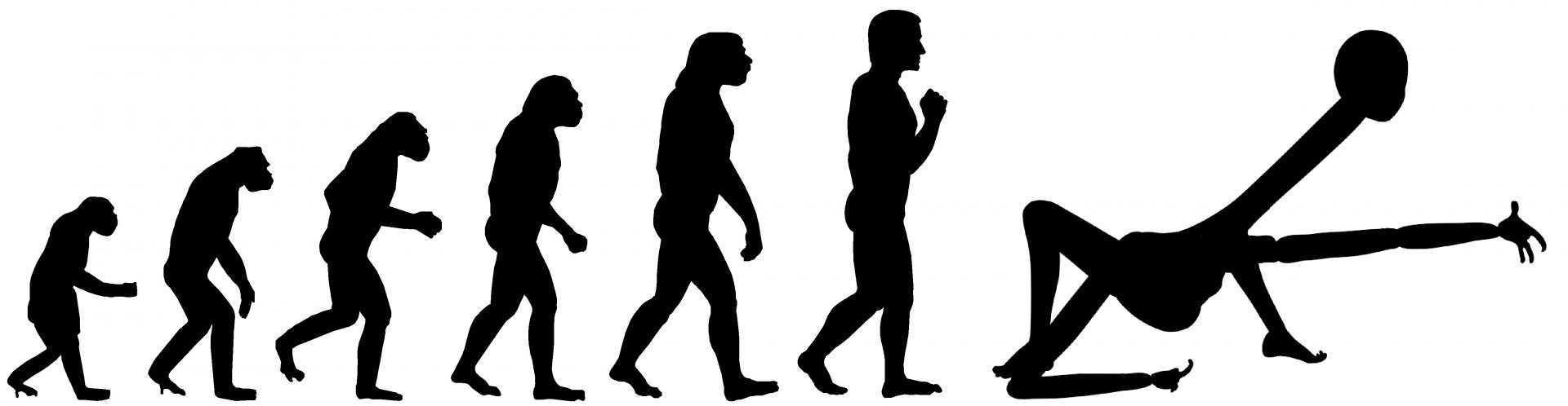 01-evolutionary-chain meme.png