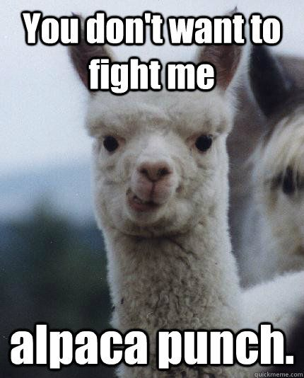 1edb6bd90dd51a96831d08f149eb1b78--alpacas-funny-funny-llama.jpg